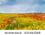 Amazing Red Poppies And Yellow...