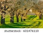 Tree Lined Farm Track With...