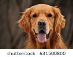 Stock photo the dog walking 631500800