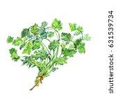 painting cilantro  coriander.... | Shutterstock . vector #631539734