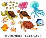 Different Types Of Sea Animals...