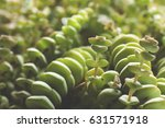string of buttons close up  | Shutterstock . vector #631571918