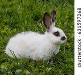 white rabbit on the grass | Shutterstock . vector #631597268