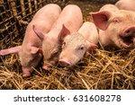 funny piglets | Shutterstock . vector #631608278