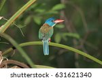 Small photo of Green-backed Kingfisher (Actenoides monachus) in Tangkoko National Park, on Sulawesi island
