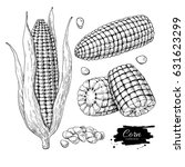 corn hand drawn vector... | Shutterstock .eps vector #631623299