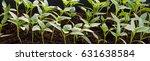 young green seedlings plants... | Shutterstock . vector #631638584
