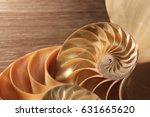 nautilus shell symmetry...   Shutterstock . vector #631665620