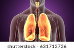 3d illustration human body lungs | Shutterstock . vector #631712726