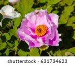 peony and bee. | Shutterstock . vector #631734623