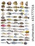 Saltwater Marine Fish Type...