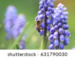 The Bee On The Purple Flower ...