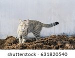 gray cat on the ground | Shutterstock . vector #631820540