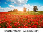 Blooming Poppies On Field With...