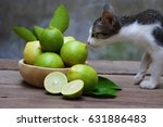 Lemon On Wooden Table And Cat ...