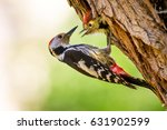 Stock photo cute woodpecker on tree green forest background bird middle spotted woodpecker dendrocopos 631902599