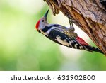 Cute Woodpecker On Tree. Green...