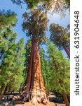 general sherman tree in sequoia ...   Shutterstock . vector #631904648