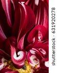 red dahlia flower macro shot.... | Shutterstock . vector #631920278