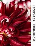 red dahlia flower macro shot.... | Shutterstock . vector #631920284