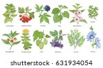 medical plants colorful set.... | Shutterstock .eps vector #631934054