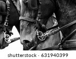 horses in carriage close up in... | Shutterstock . vector #631940399