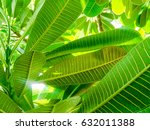 green leaves in the forest. | Shutterstock . vector #632011388