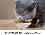 Stock photo british blue cat eats cat food 632026910