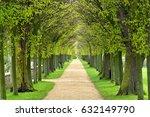 avenue of linden trees  tree... | Shutterstock . vector #632149790