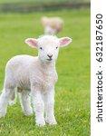 small cute lamb gambolling in a ... | Shutterstock . vector #632187650