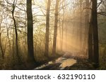 early spring forest on a foggy... | Shutterstock . vector #632190110