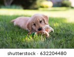 Stock photo puppy with her toy 632204480