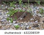 the chameleon lays eggs | Shutterstock . vector #632208539