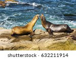 Seals Play La Jolla Cove San...