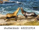 Seals Play La Jolla Cove San...
