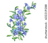 Periwinkle. Illustration Of...