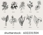hand drawn exotic plants set... | Shutterstock .eps vector #632231504