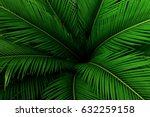 palm leaves green pattern ... | Shutterstock . vector #632259158