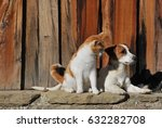 Stock photo a cat and a dog outside the cottage 632282708