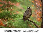 Stock photo eurasian eagle owl bubo bubo is a species of eagle owl that resides in much of eurasia it is 632321069