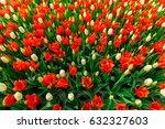 flowers at keukenhof garden ... | Shutterstock . vector #632327603