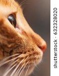 Ginger Cat Profile Macro Close...