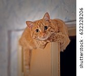 Stock photo ginder red cat climbed to the top of the door 632328206