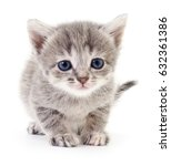 Stock photo small gray kitten isolated on white background 632361386