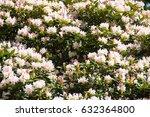 flowers background | Shutterstock . vector #632364800