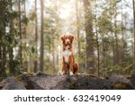 portrait of a new scotland... | Shutterstock . vector #632419049