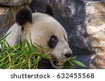 the giant panda is a large... | Shutterstock . vector #632455568