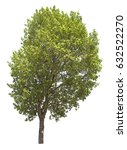 isolated tree on white... | Shutterstock . vector #632522270