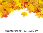 Autumn Maple Leaves Isolated O...