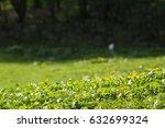 spring flowers   Shutterstock . vector #632699324